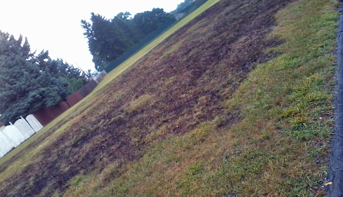 Aston Lightning Grass