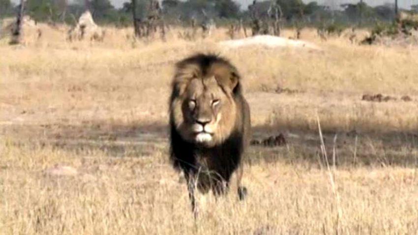 TLMD-leon-cecil-zimbabue-nbc-vod