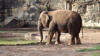 elefante-zoologico-sa-ringling-bros3