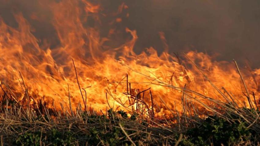 incendio-de-maleza1