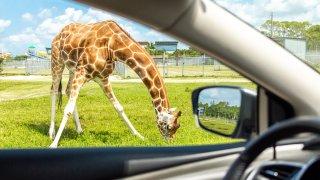 Recorrido estilo safari