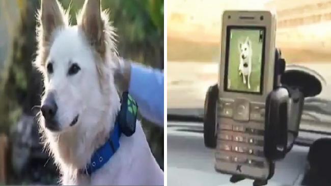 tlmd_tecnologia_usada_en_la_frontera_metodos_usados_para_detectar_inmigrantes_indocumentados_con_perros_y_la_patrulla_fronteriza