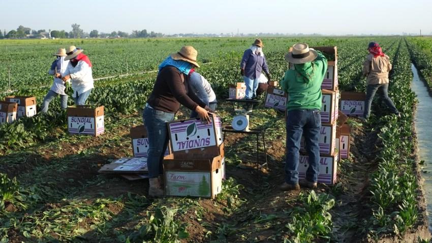 trabajadores-hispanos-agric