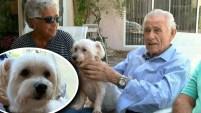 Todos estaban asombrados de que lo que Buddy hizo en una emergencia médica que sufrió su propietario.
