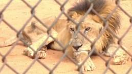 Animales en alarmante desnutrición sufren efectos de la escasez en zoológico