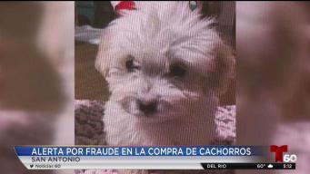 Alerta al consumidor: estafas al comprar cachorros