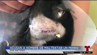 Arrestan a hombre acusado de apuñalar a un perrito