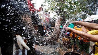 Con elefantes, la guerra de agua más grande del mundo