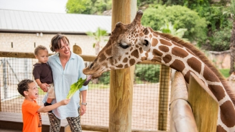 Zoológico extiende horario por vacaciones de primavera