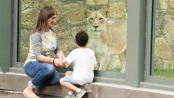 Entradas al zoológico a mitad de precio este lunes