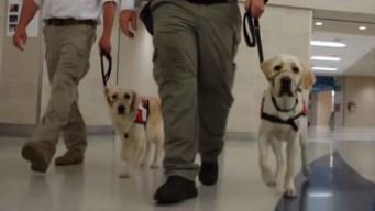 Caninos de San Antonio ayudarán a víctimas en El Paso