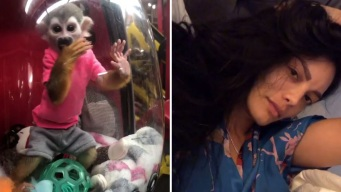 Polémica por video de Zuleyka Rivera con monito encerrado