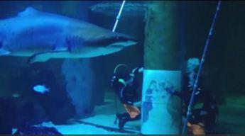 Buzos sufren por tiburones curiosos con escena de Belén