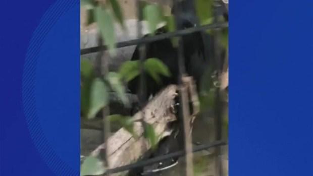 [TLMD - NATL] Mujer es atacada por un jaguar en zoo de Arizona