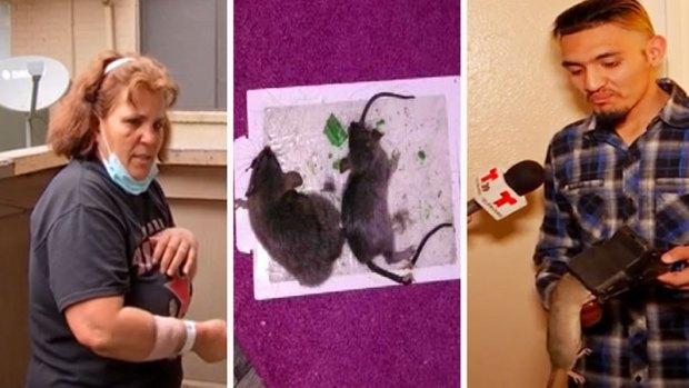 [TLMD - Dallas] Residentes denuncian vivir entre ratas en Dallas