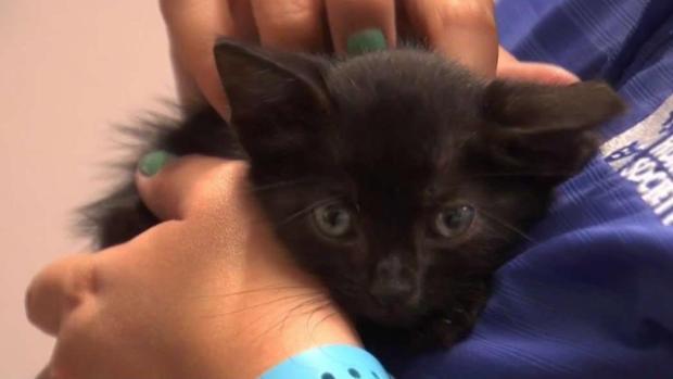 [TLMD - SA] Rescatan a gatito abandonado en basurero