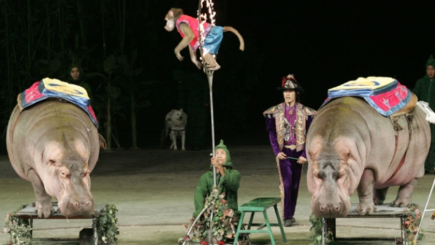 Video: Un circo sin animales, ¿irías?