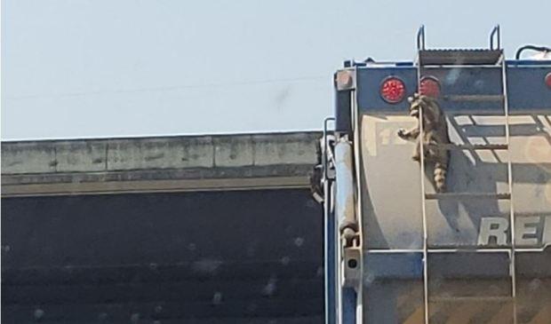 [TLMD - NATL] Descubierto polizón inesperado colgado de camión en marcha