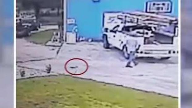 [TLMD - LV]Ardilla ataca a un hombre en Florida