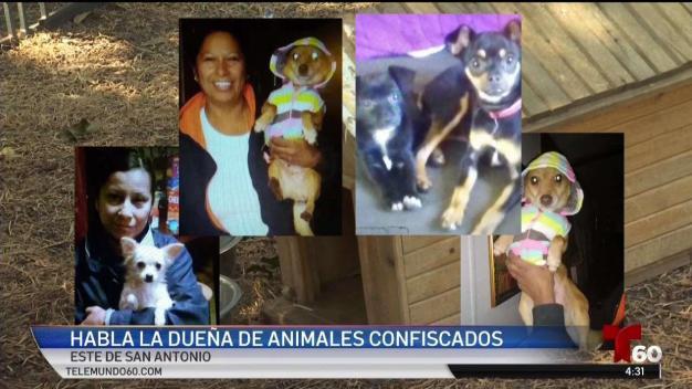 Habla dueña de 29 animales confiscados de una casa