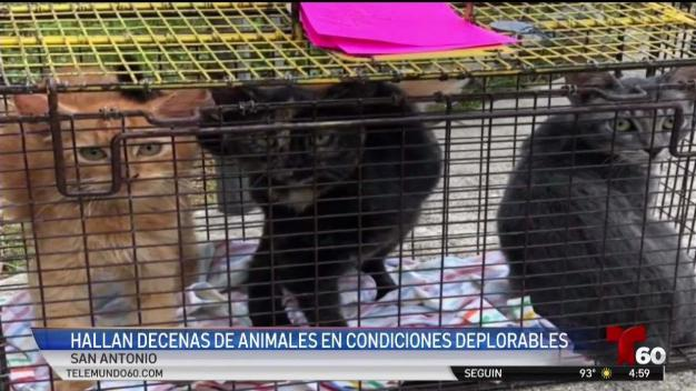 Halan decenas de animales en condiciones deprorables