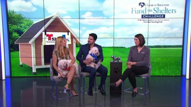 Descubre mitos sobre mascotas