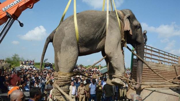 """Elefante desterrado tras """"acusación"""" de horrendo crimen"""