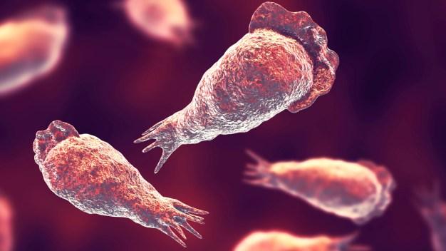 """Horror en el agua: lo mata una ameba """"comecerebros"""""""