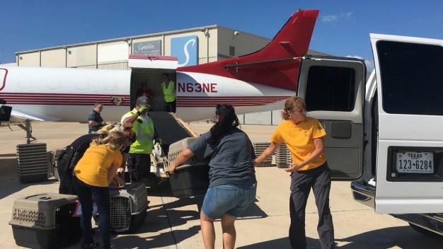 Aviones parten llenos de mascotas afectadas por Harvey