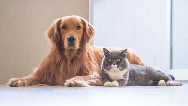 Lanzan competencia para apoyar adopciones de animales
