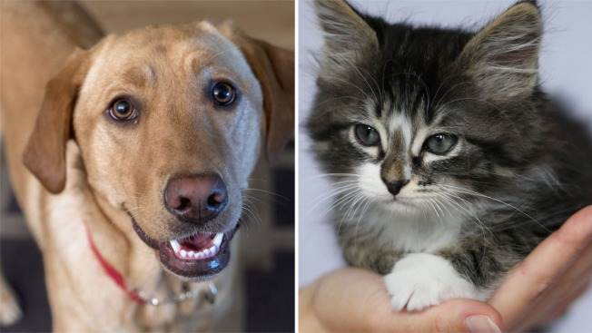 Más de 40000 mascotas adoptadas hasta ahora — Desocupar los Albergues
