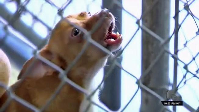 Conoce la labor de Animal Care Services