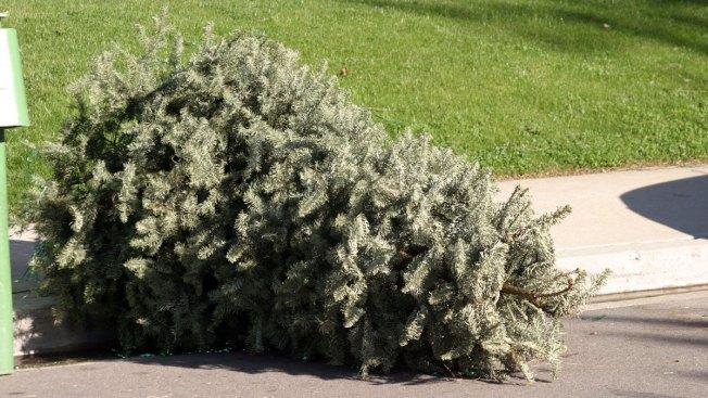 ¡No lo tires! Recicla tu arbolito de Navidad