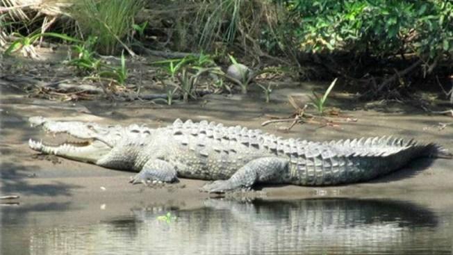 Cocodrilo mata a joven en reserva de Chiapas