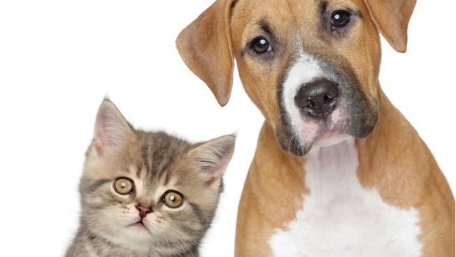 Universidad invita a bendecir a las mascotas