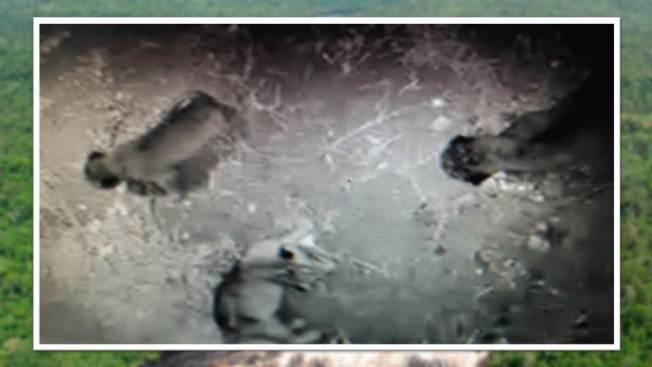 Captado en cámara nacimiento de leones en San Antonio