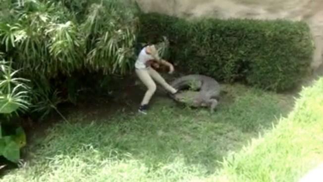 Video: Joven se lanza a fosa de cocodrilos