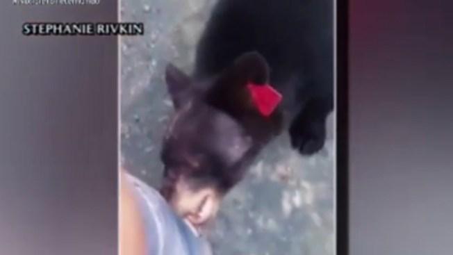 Captado en cámara: filma cómo la muerde un oso