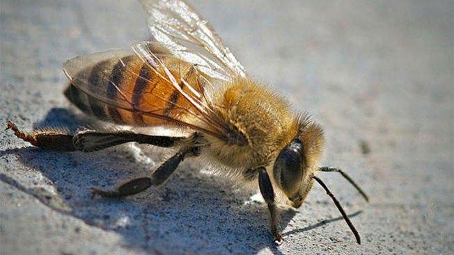 Hospitalizan a tres en SA tras ataque de abejas