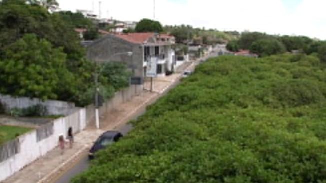 El árbol gigantesco de marañón en Brasil