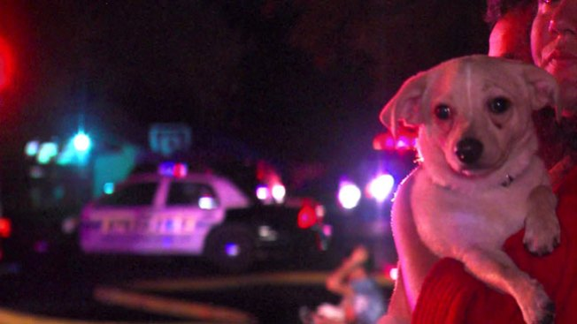 Cachorro salva a familia de incendio