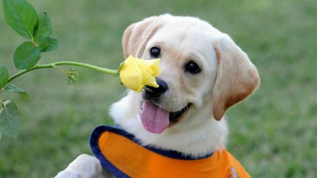 Los perros también recuerdan