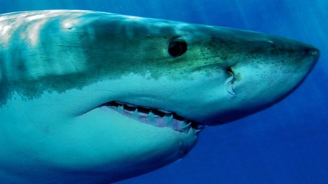 Tiburón da gran susto a pescadores
