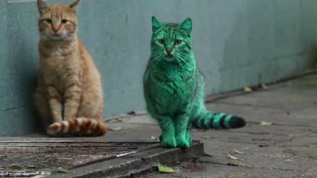 Resuelto misterio del gato callejero verde