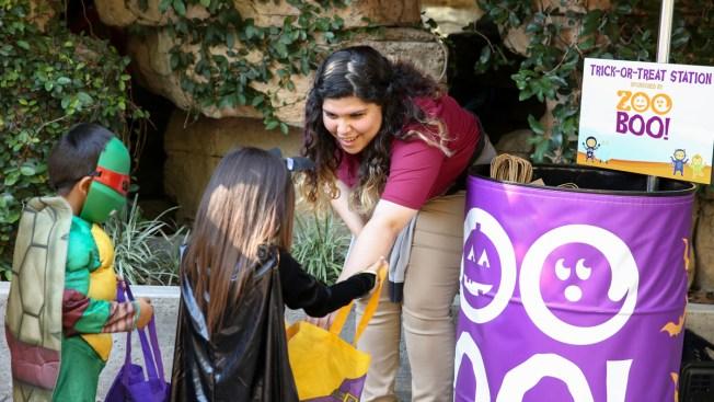 Zoológico de San Antonio ofrece más de 100 empleos