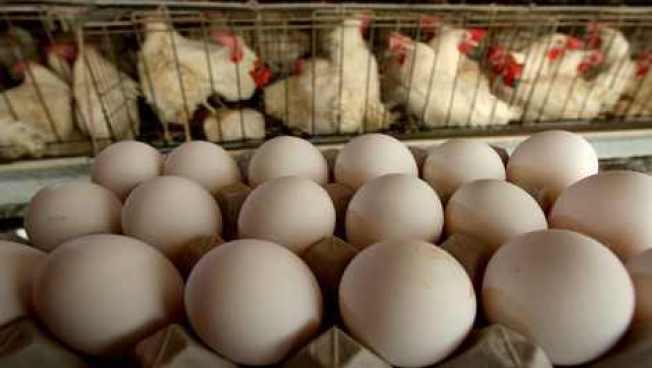 Escasez de huevos limita compras en H-E-B